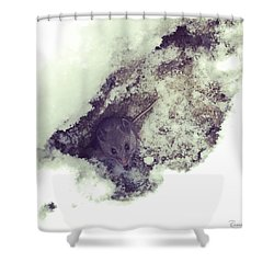Shower Curtain featuring the photograph Snow Mouse by Rasma Bertz
