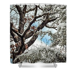 Snow On A Cedar Shower Curtain