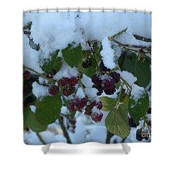 Snow On Blackberries Shower Curtain