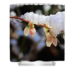 Snow On Blueberry Blossoms Shower Curtain by Kristin Elmquist