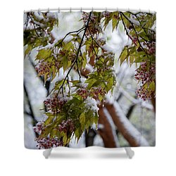 Shower Curtain featuring the photograph snow on the Cherry blossoms by Chris Flees