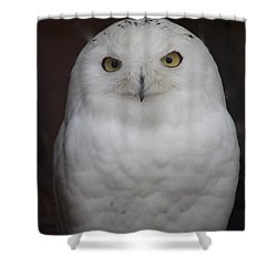 Shower Curtain featuring the photograph Snow Owl by Debra     Vatalaro