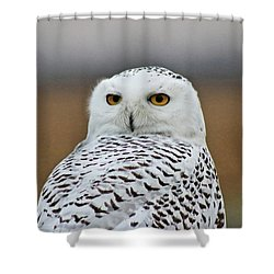 Snow Owl Strare Shower Curtain