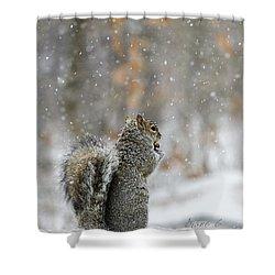 Snow Squirrel Shower Curtain