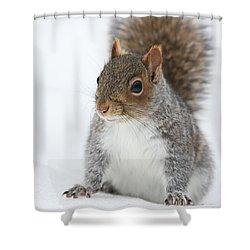 Snow Squirrel Shower Curtain by Karol Livote