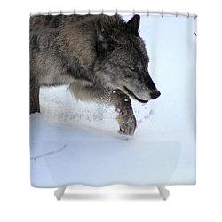 Snow Walker Shower Curtain