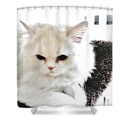 Snowball Is 92 Year Old Widows Cat Shower Curtain by Marsha Heiken