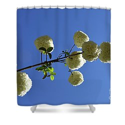 Shower Curtain featuring the photograph Snowballs On A Stick by Skip Willits