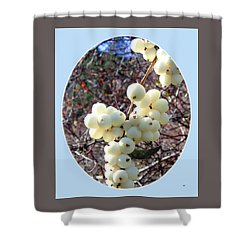 Shower Curtain featuring the photograph Snowberry Cluster by Will Borden