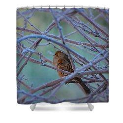 Snowbirds Shower Curtain