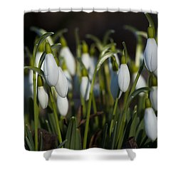 Snowdrops Shower Curtain by Dan Hefle