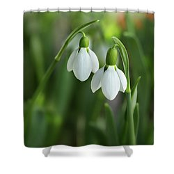 Shower Curtain featuring the photograph Snowdrops by Mary Jo Allen