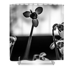 Snowdrops Standing Tall Shower Curtain