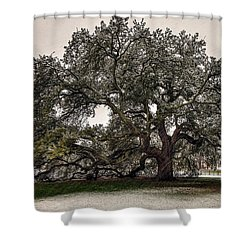 Snowfall On Emancipation Oak Tree Shower Curtain