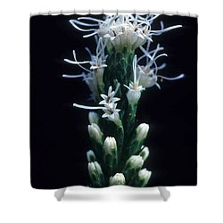 Snowflake Flower Shower Curtain by Laurie Paci