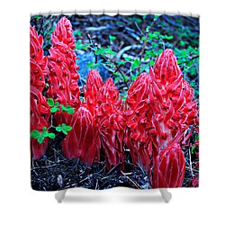 Snowflower Pow Wow Shower Curtain