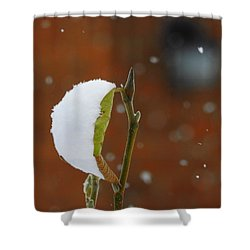 Snowing Shower Curtain by Betty-Anne McDonald