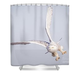 Snowy Owl Flying Dirty Shower Curtain