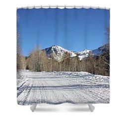 Snowy Aspen Shower Curtain by Kim Hojnacki