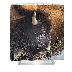 Snowy Bison Shower Curtain