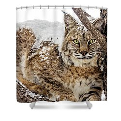 Snowy Bobcat Shower Curtain