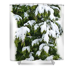 Shower Curtain featuring the photograph Snowy Cedar Boughs by Will Borden