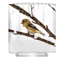 Snowy Day Goldfinch Shower Curtain
