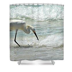 Snowy Egret 6265 Lido Beach Shower Curtain