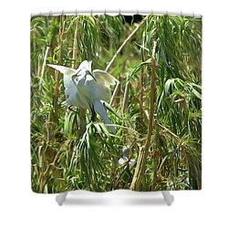 Snowy Egret Feeding Its Young - Digitalart Shower Curtain