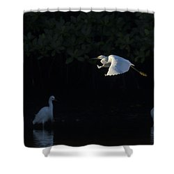 Snowy Egret Gliding In The Morning Light Shower Curtain