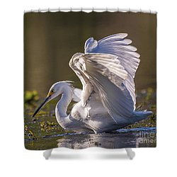 Snowy Egret Hunting - Egretta Thula Shower Curtain