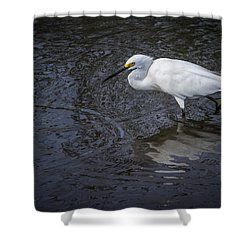 Snowy Egret Hunting Shower Curtain