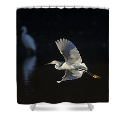 Snowy Egret In Flight In The Morning Light Shower Curtain