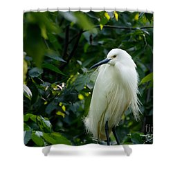 Snowy Egret In The Trees Shower Curtain