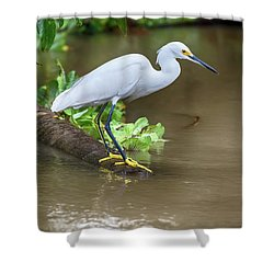 Shower Curtain featuring the photograph Snowy Egret by John Haldane