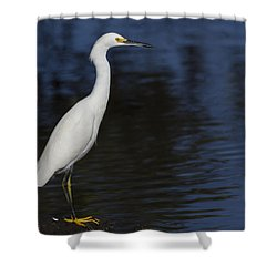 Snowy Egret Perched On A Rock Shower Curtain