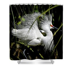 Shower Curtain featuring the photograph Snowy Egret by Steven Sparks