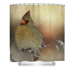 Snowy Female Cardinal Shower Curtain
