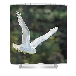 Snowy Glide Shower Curtain