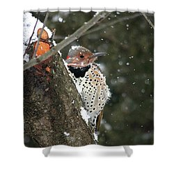 Snowy Northern Flicker Shower Curtain by Trina Ansel