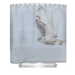 Shower Curtain featuring the photograph Snowy Owl #3/3 by Patti Deters