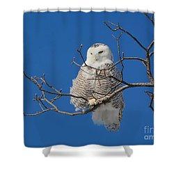 Snowy Owl 7 Shower Curtain