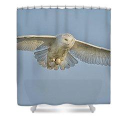 Snowy Owl Against Blue Sky Shower Curtain