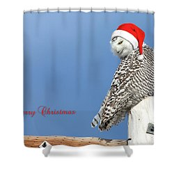 Shower Curtain featuring the photograph Snowy Owl Christmas Card by Everet Regal