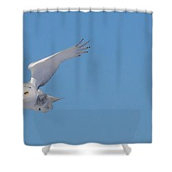 Snowy Owl - Dive Shower Curtain
