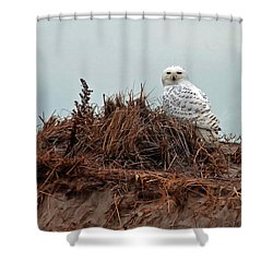 Snowy Owl In Dunes Shower Curtain