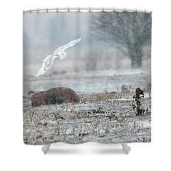 Snowy Owl In Flight 3 Shower Curtain by Gary Hall