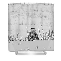 Snowy Owl In Snowy Field Shower Curtain by Carrie Ann Grippo-Pike