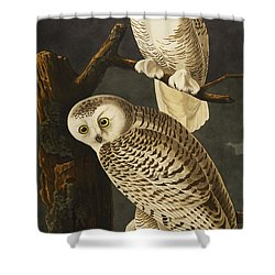 Snowy Owl Shower Curtain by John James Audubon