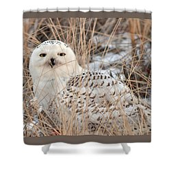 Snowy Owl Shower Curtain by Nancy Landry